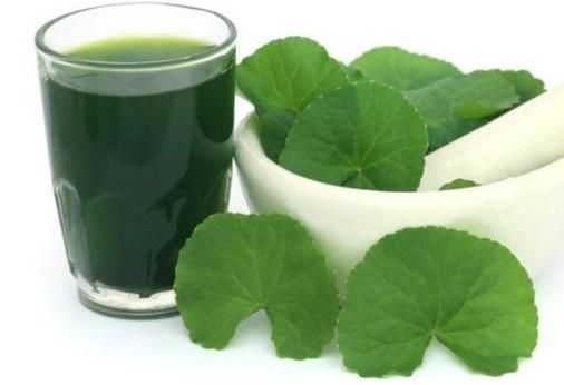 rau má giảm béo, nước rau má giảm cân, rau má có giảm cân không, uống rau má giảm cân, uống rau má giảm cân không, bột rau má giảm cân, uống nước rau má giảm cân, sinh tố rau má giảm cân, nước ép rau má giảm cân